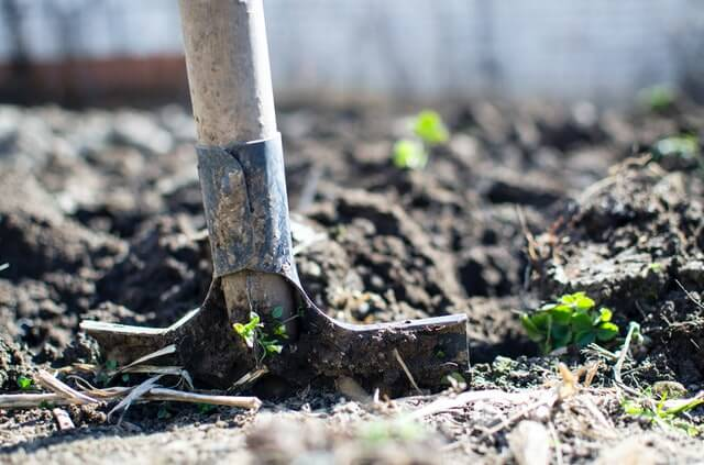 how to choose a garden spot