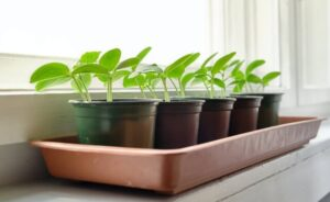 how to grow plants from seeds (1)