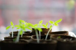 how to grow plants from seeds