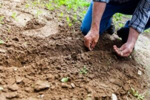how to plant seeds outdoor