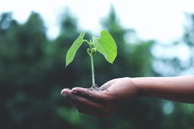 how to start a garden from scratch 4 (1)
