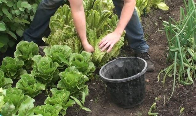 how to take care of vegetables and flowers garden