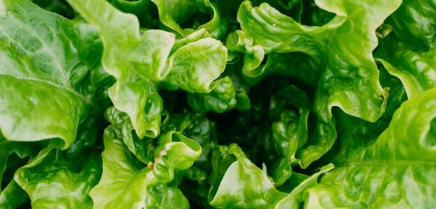 21 Best And Easy Vegetables to Grow In Sandy Soil