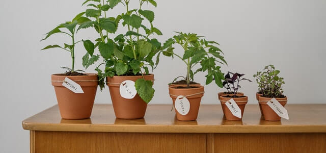 5 Things Plants Need To Grow