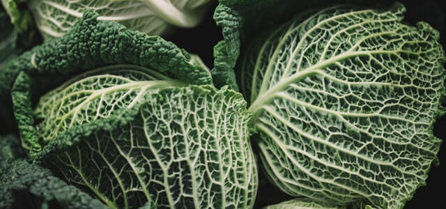 How Grow Cabbage From Scraps