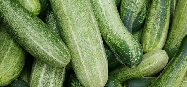 grow cucumbers from cucumbes