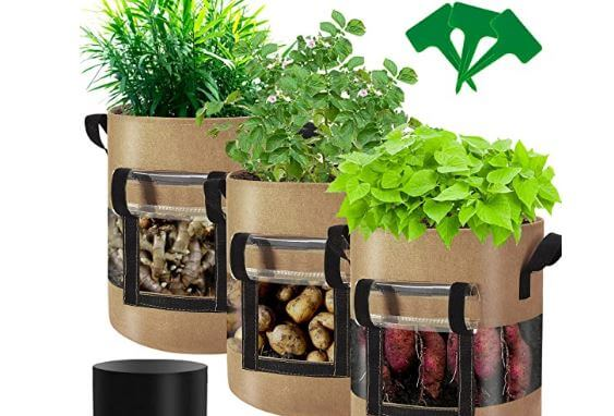 Best Containers For Growing Ginger