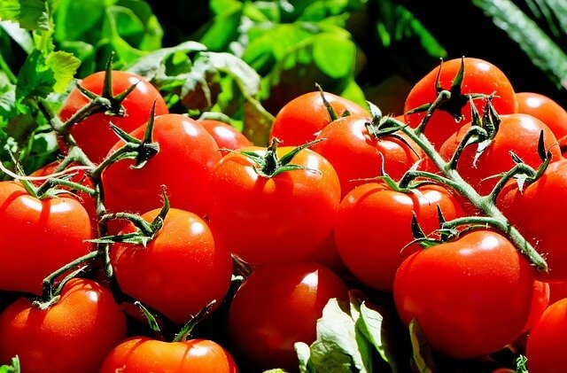 CAN YOU PLANT TOMATOES AND PEPPER TOGETHER
