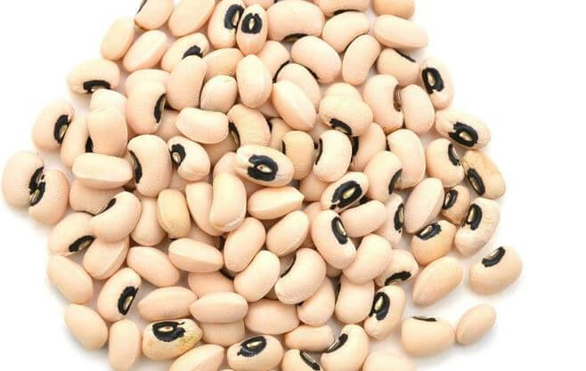 When Should I Start Cowpeas Indoors